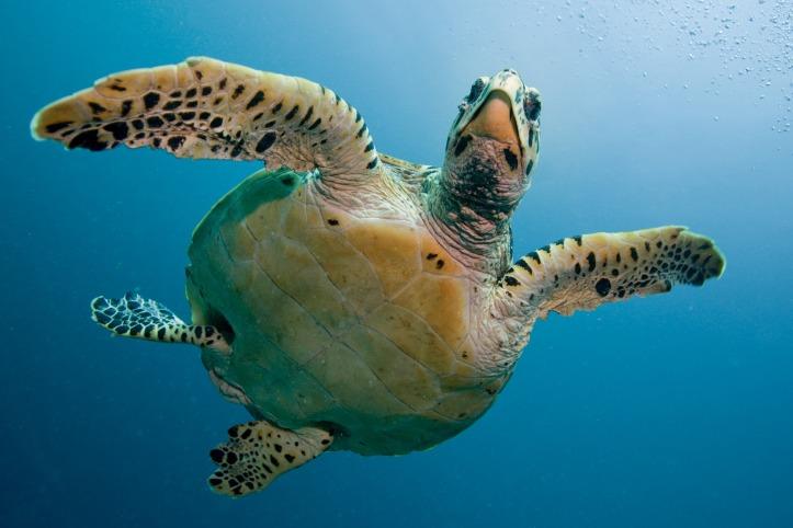 turtle-2250720_1920