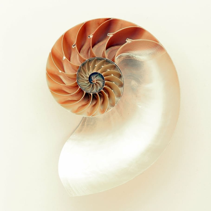 mollusc-mother-of-pearl-nautilus-pattern